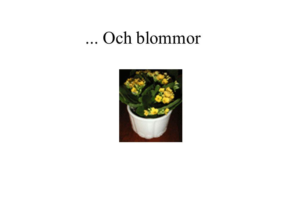 ... Och blommor