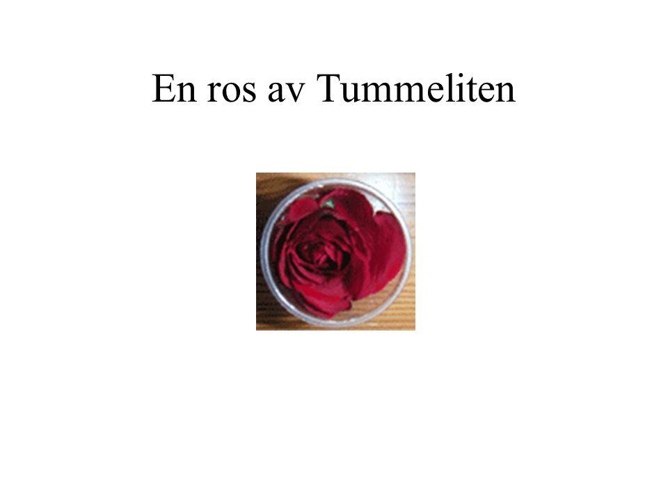 En ros av Tummeliten