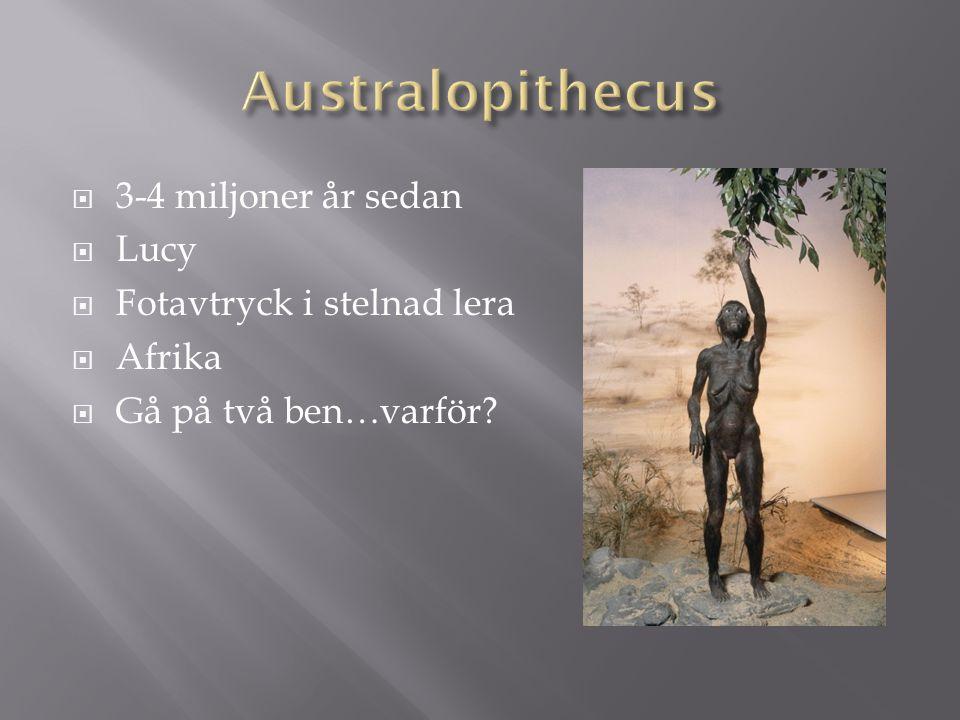  3-4 miljoner år sedan  Lucy  Fotavtryck i stelnad lera  Afrika  Gå på två ben…varför?