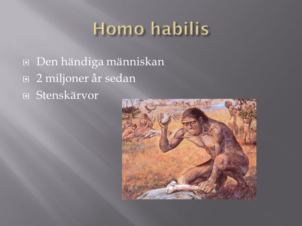  den upprättgående människan  1,5miljoner – 300000år sedan  redskapstillverkande  Eld 500 000 år sedan  hygglig språkförmåga  lämnade Afrika  Spjutet, eldhärdat
