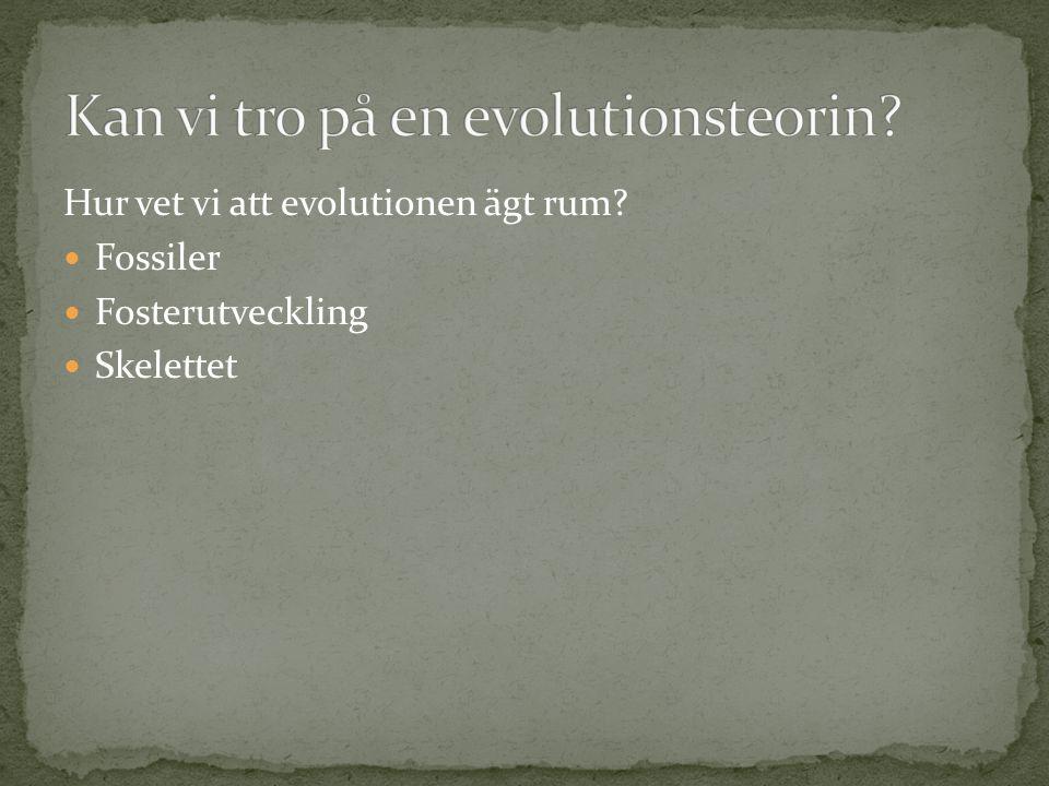 Hur vet vi att evolutionen ägt rum?  Fossiler  Fosterutveckling  Skelettet