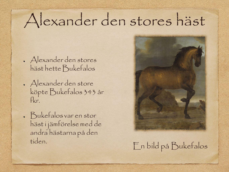 Alexander den stores häst Alexander den stores häst hette Bukefalos Alexander den store köpte Bukefalos 343 år fkr. Bukefalos var en stor häst i jämfö