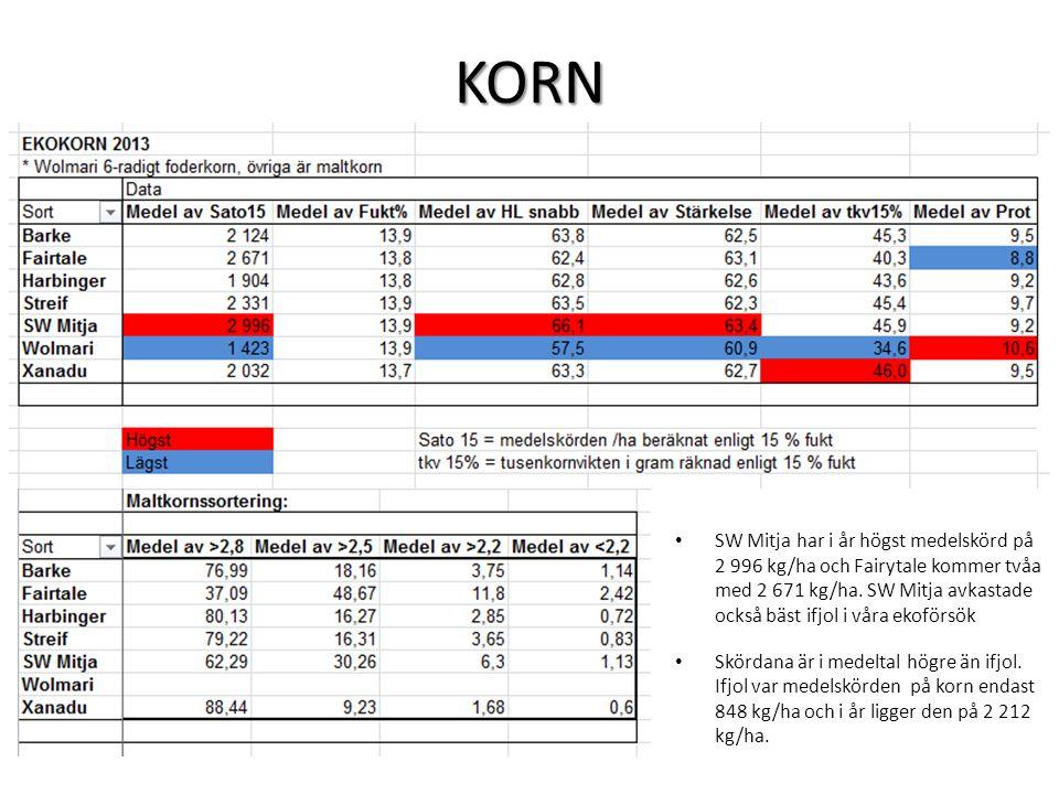 KORN • SW Mitja har i år högst medelskörd på 2 996 kg/ha och Fairytale kommer tvåa med 2 671 kg/ha.