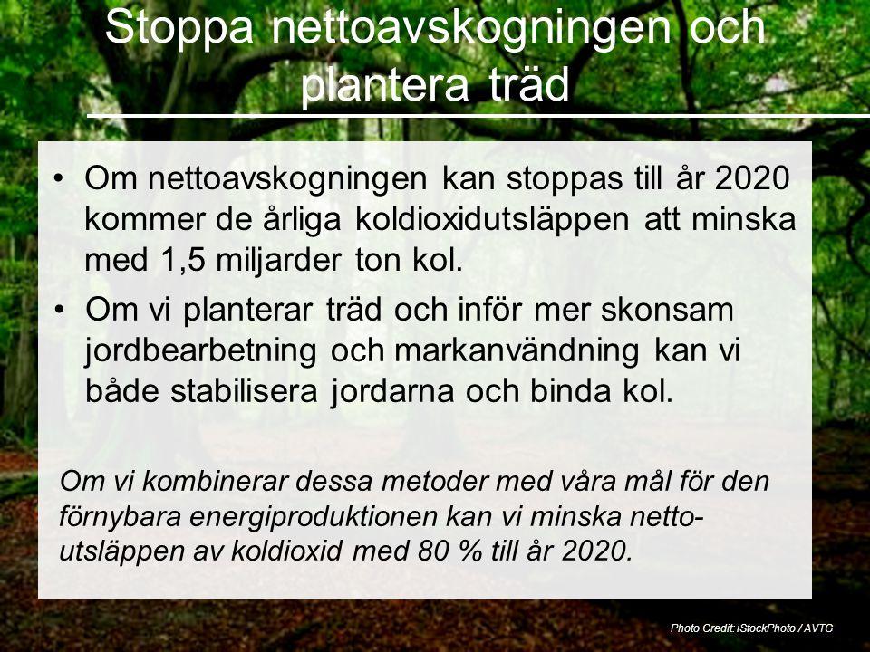 Stoppa nettoavskogningen och plantera träd •Om nettoavskogningen kan stoppas till år 2020 kommer de årliga koldioxidutsläppen att minska med 1,5 miljarder ton kol.