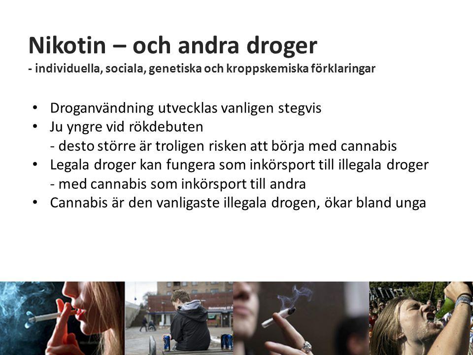 Nikotin – och andra droger - individuella, sociala, genetiska och kroppskemiska förklaringar • Droganvändning utvecklas vanligen stegvis • Ju yngre vi