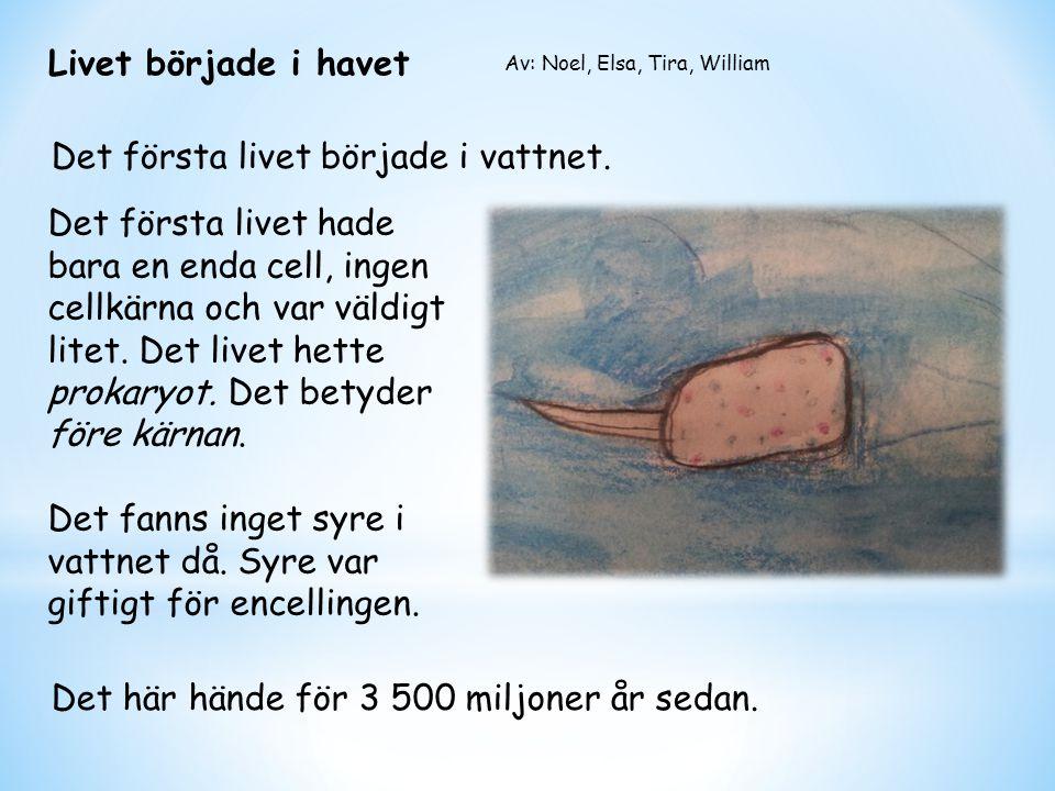 Livet började i havet Det första livet hade bara en enda cell, ingen cellkärna och var väldigt litet. Det livet hette prokaryot. Det betyder före kärn