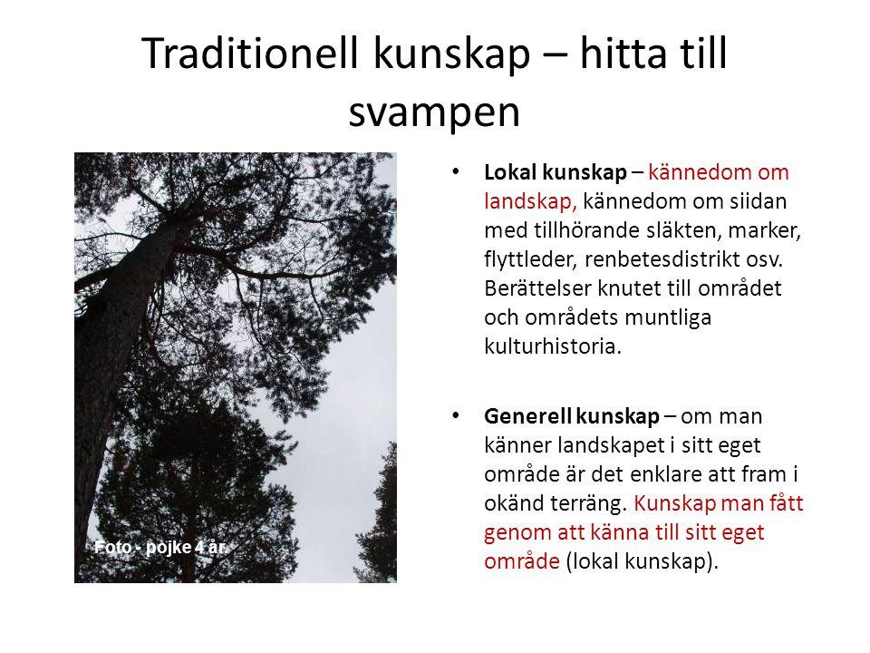 Traditionell kunskap – hitta till svampen • Lokal kunskap – kännedom om landskap, kännedom om siidan med tillhörande släkten, marker, flyttleder, renb