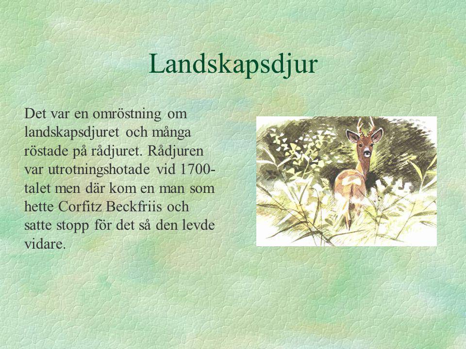 Landskapsdjur Det var en omröstning om landskapsdjuret och många röstade på rådjuret. Rådjuren var utrotningshotade vid 1700- talet men där kom en man