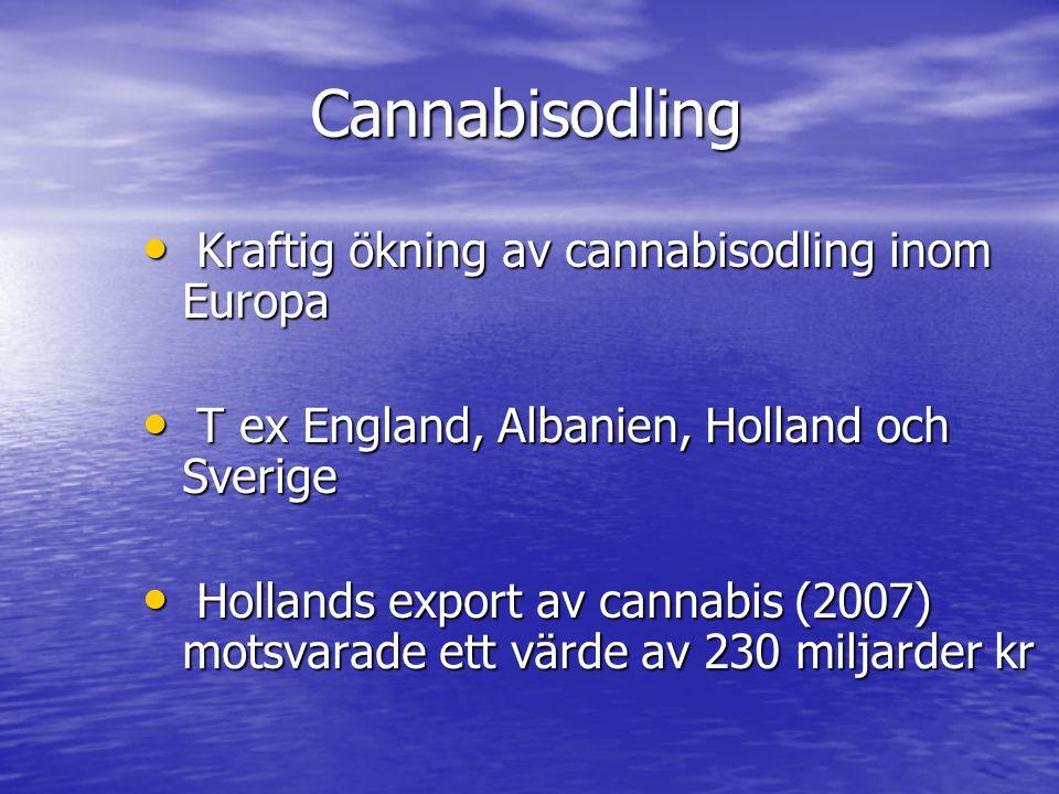 Cannabisodling • Kraftig ökning av cannabisodling inom Europa • T ex England, Albanien, Holland och Sverige • Hollands export av cannabis (2007) motsv