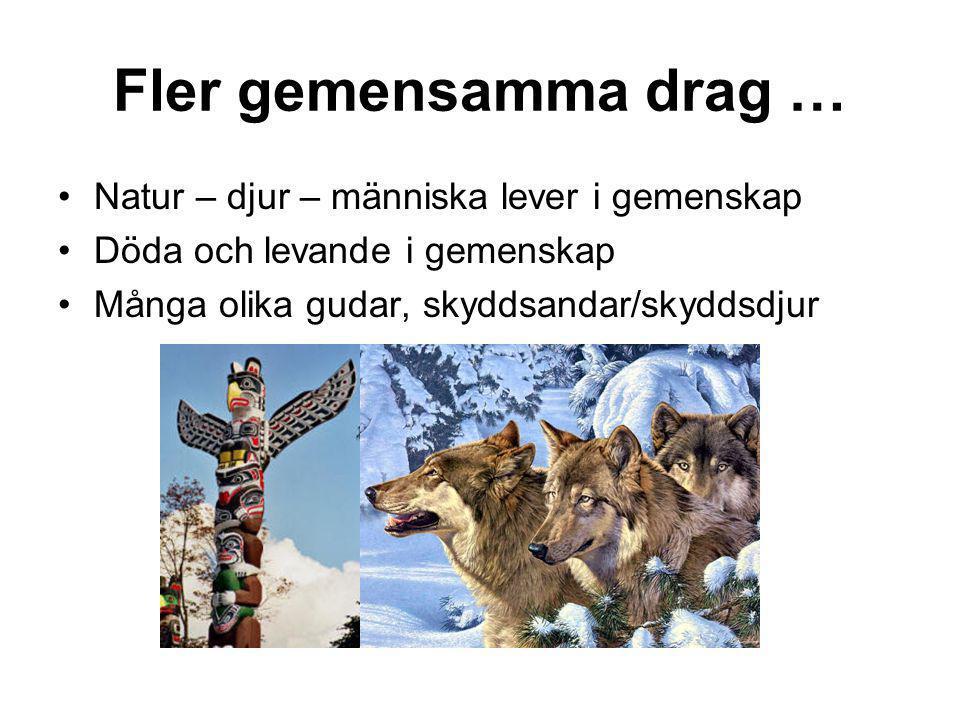 Fler gemensamma drag … •Natur – djur – människa lever i gemenskap •Döda och levande i gemenskap •Många olika gudar, skyddsandar/skyddsdjur