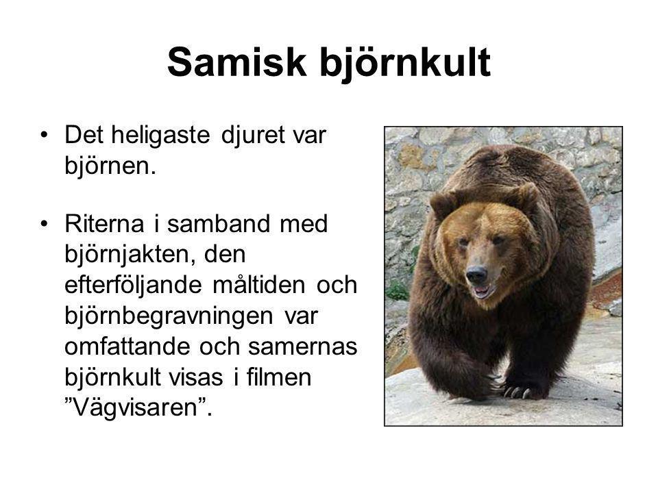 Samisk björnkult •Det heligaste djuret var björnen.