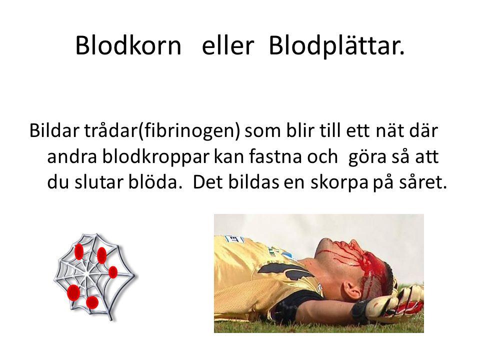 Blodkorn eller Blodplättar.