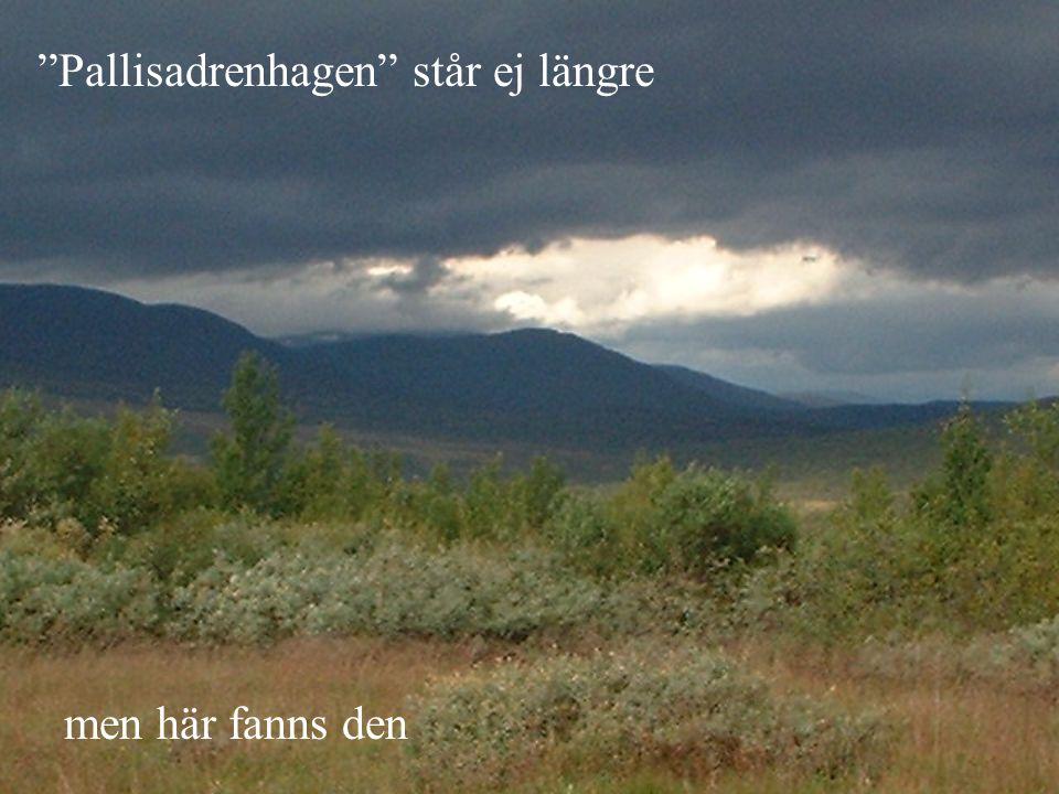 """""""Pallisadrenhagen"""" står ej längre men här fanns den"""