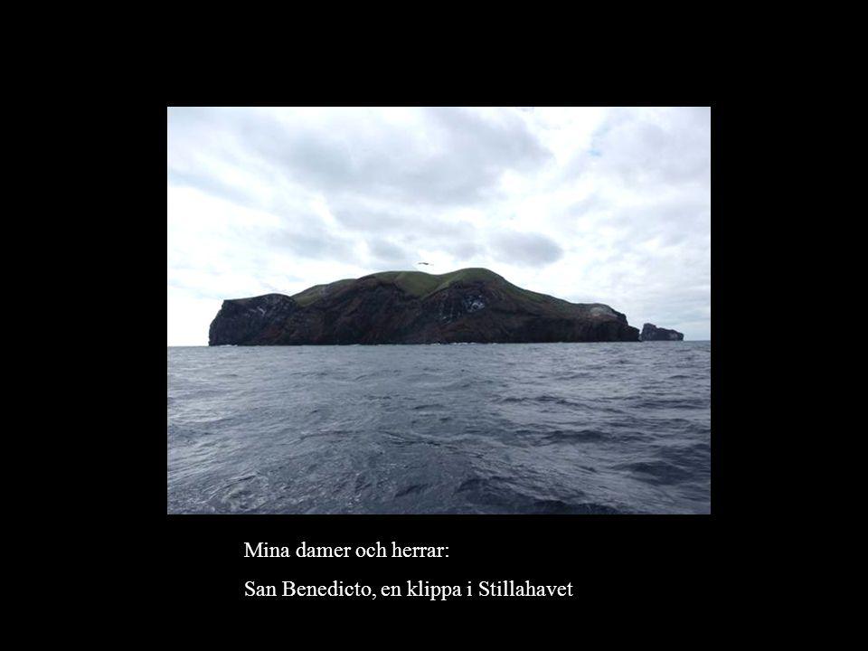 Mina damer och herrar: San Benedicto, en klippa i Stillahavet
