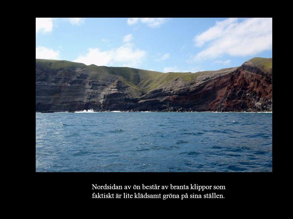 Det bor Albatrosser här.Anna tittar nära på en.