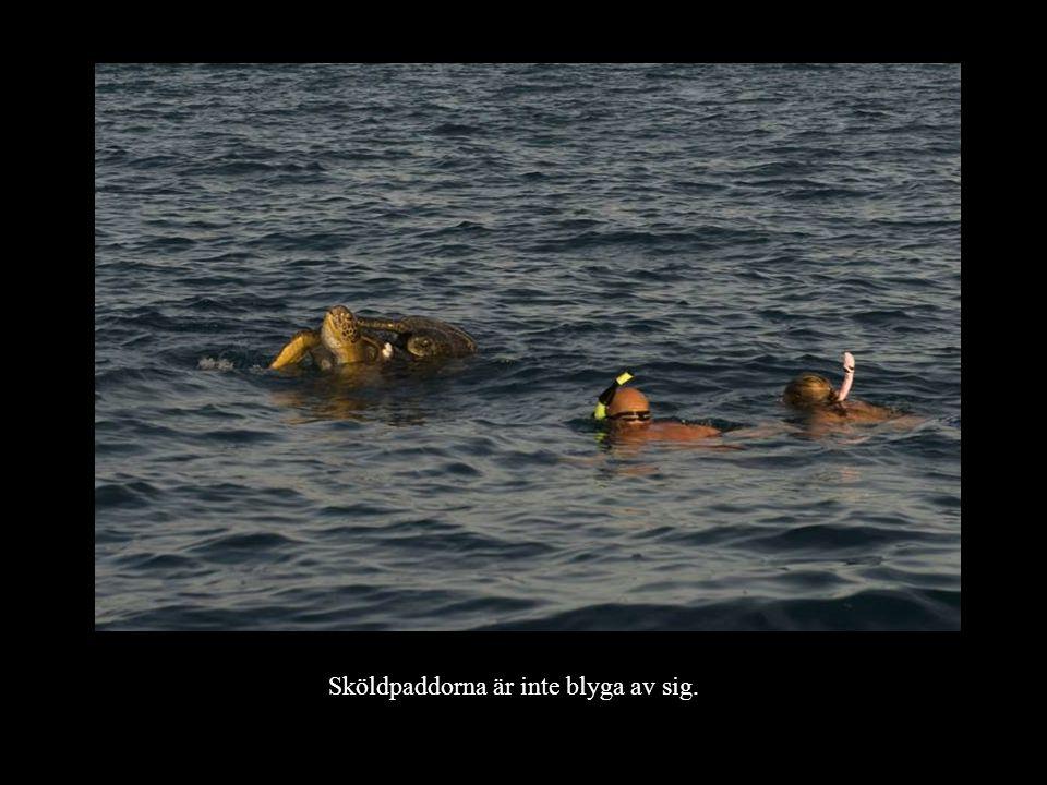 Sköldpaddorna är inte blyga av sig.