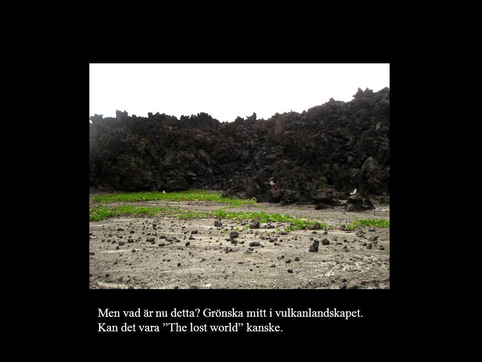 Men vad är nu detta? Grönska mitt i vulkanlandskapet. Kan det vara The lost world kanske.