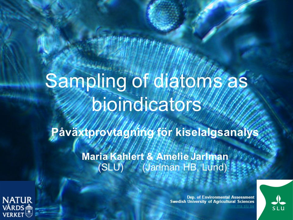 Sampling of diatoms as bioindicators General •Diatoms are used for biomonitoring of water quality in most countries in Europe, and also in USA, Australia, Japan and Brazil.