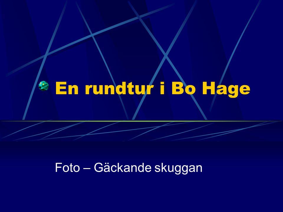 En rundtur i Bo Hage Foto – Gäckande skuggan