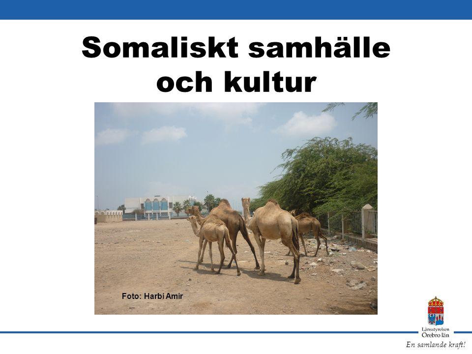 En samlande kraft! Somaliskt samhälle och kultur Foto: Harbi Amir