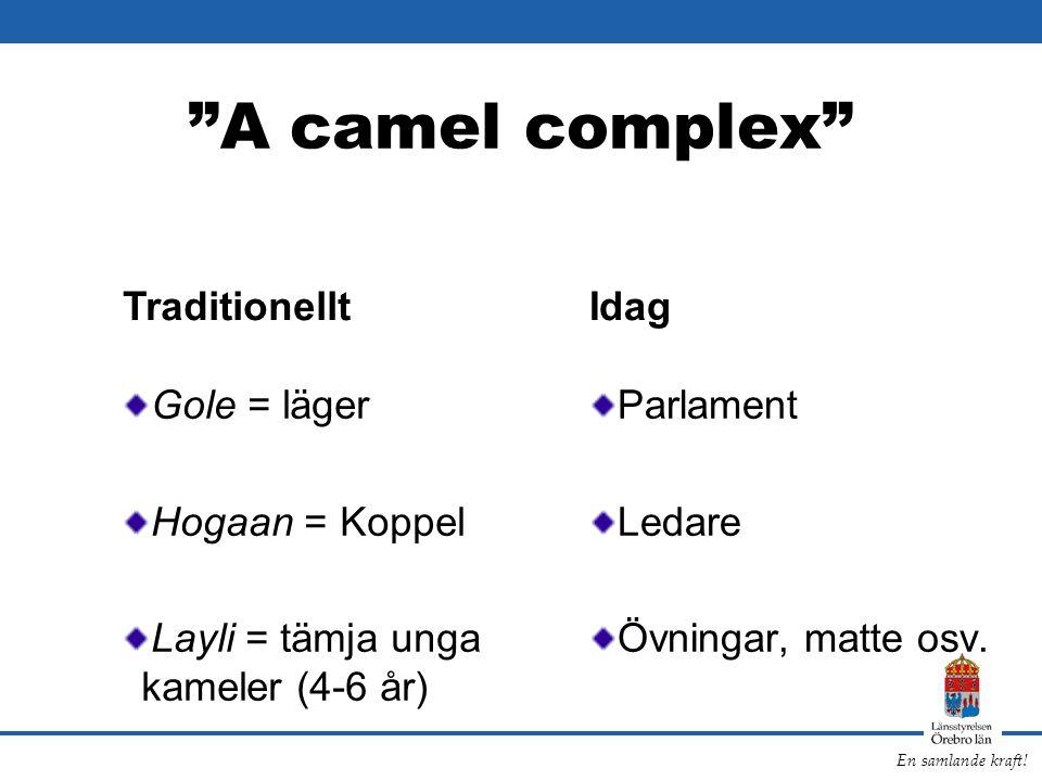 """En samlande kraft! """"A camel complex"""" Gole = läger Hogaan = Koppel Layli = tämja unga kameler (4-6 år) Parlament Ledare Övningar, matte osv. Traditione"""