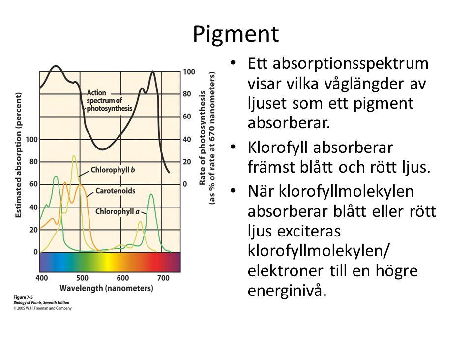 Pigment • Ett absorptionsspektrum visar vilka våglängder av ljuset som ett pigment absorberar. • Klorofyll absorberar främst blått och rött ljus. • Nä