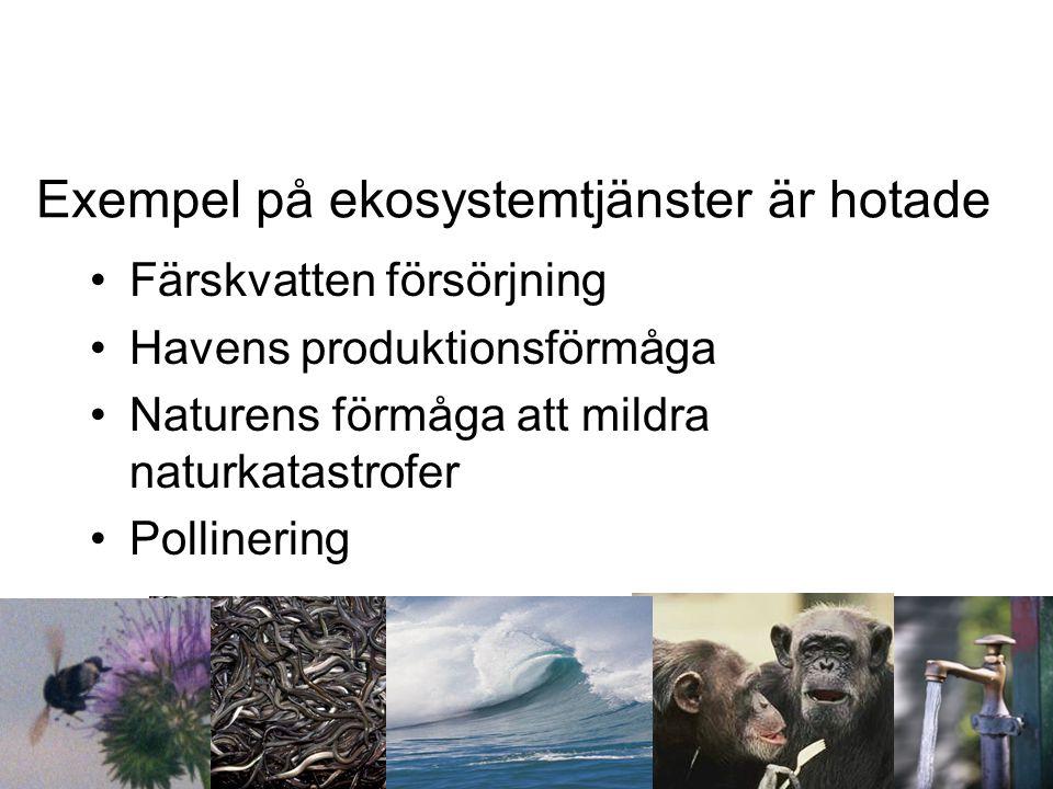 Exempel på ekosystemtjänster är hotade •Färskvatten försörjning •Havens produktionsförmåga •Naturens förmåga att mildra naturkatastrofer •Pollinering