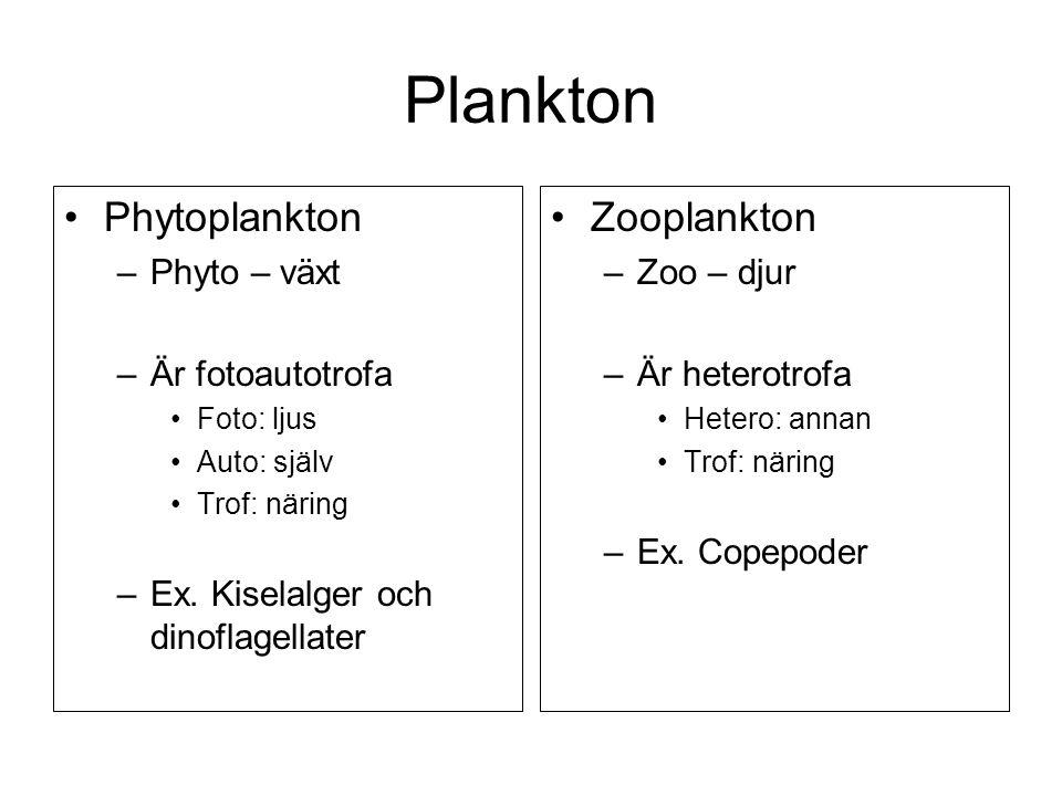 •Phytoplankton –Phyto – växt –Är fotoautotrofa •Foto: ljus •Auto: själv •Trof: näring –Ex. Kiselalger och dinoflagellater •Zooplankton –Zoo – djur –Är