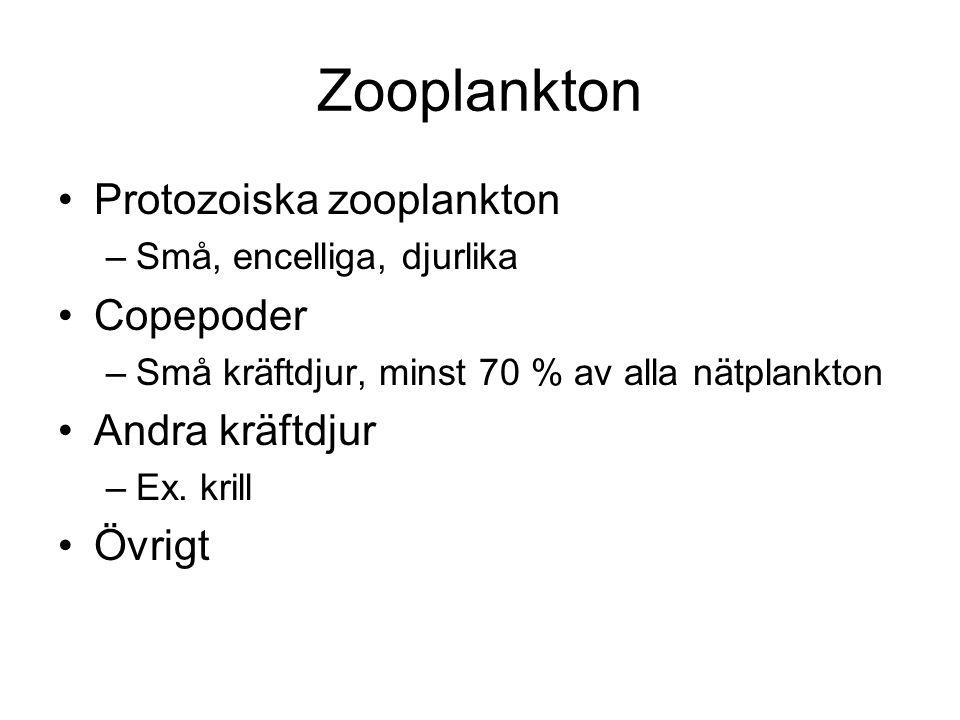 Zooplankton •Protozoiska zooplankton –Små, encelliga, djurlika •Copepoder –Små kräftdjur, minst 70 % av alla nätplankton •Andra kräftdjur –Ex. krill •