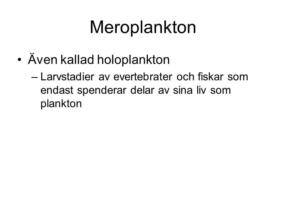 Meroplankton •Även kallad holoplankton –Larvstadier av evertebrater och fiskar som endast spenderar delar av sina liv som plankton