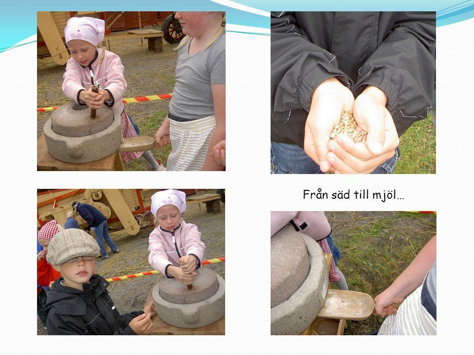 Bakstugan, här fick vi se att utav mjölet bakade man bullar i en bakugn.