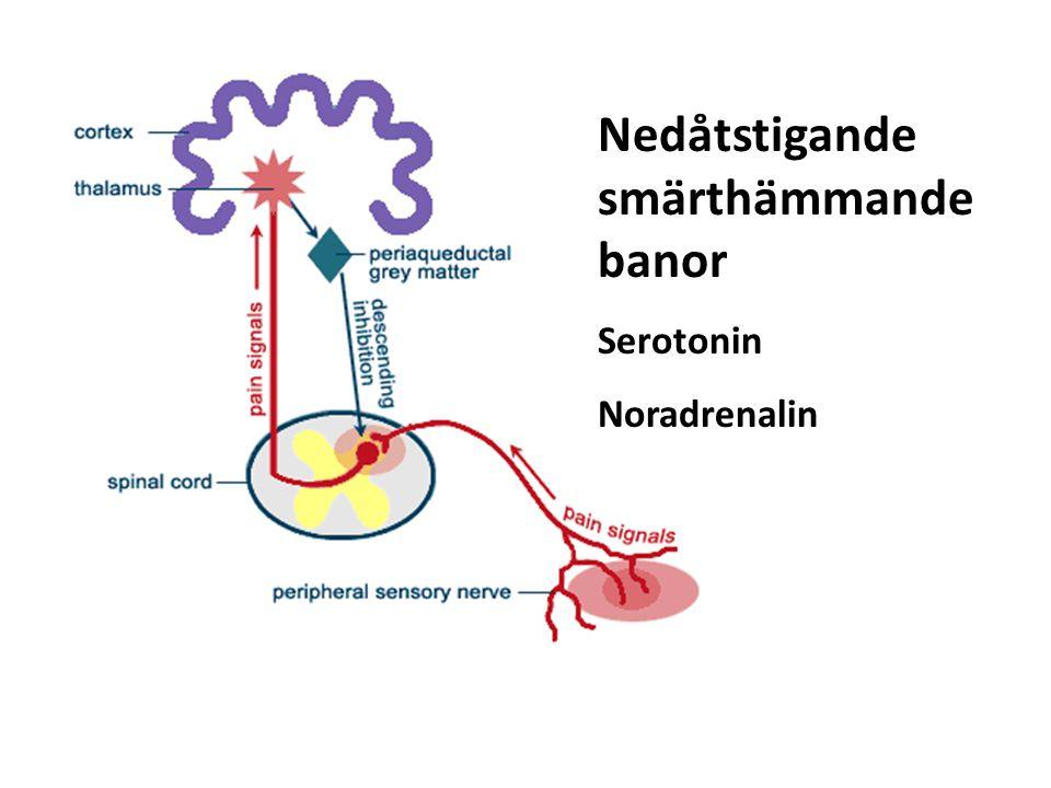 Nedåtstigande smärthämmande banor Serotonin Noradrenalin