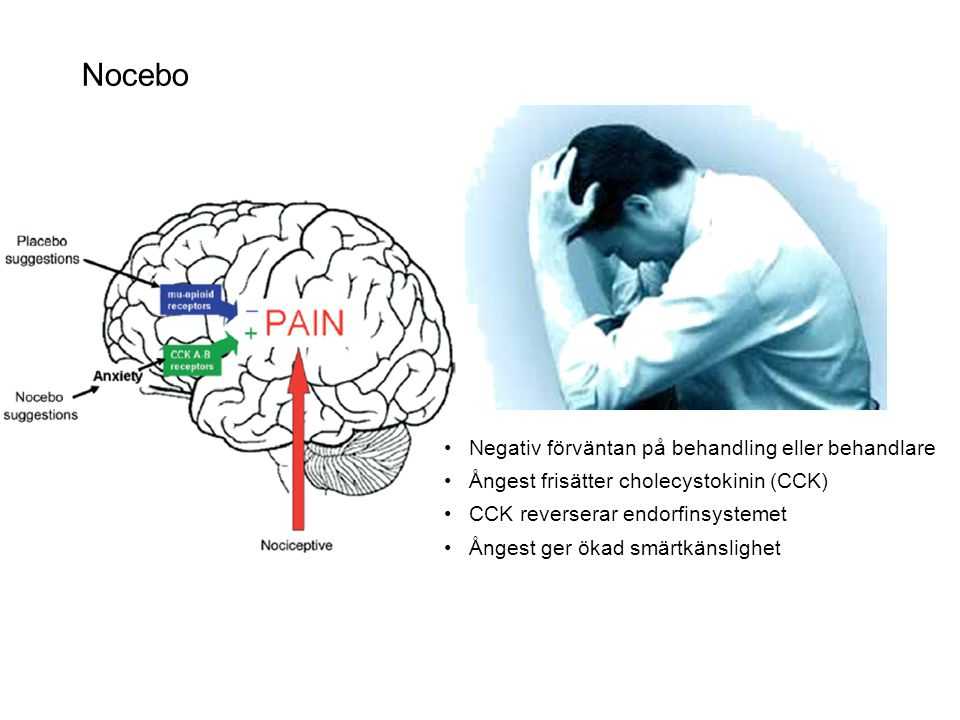 Nocebo • Negativ förväntan på behandling eller behandlare • Ångest frisätter cholecystokinin (CCK) • CCK reverserar endorfinsystemet • Ångest ger ökad