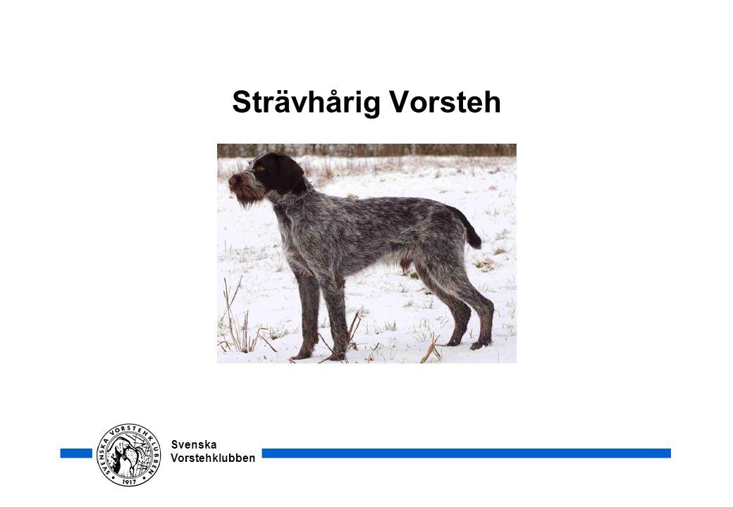 Svenska Vorstehklubben Päls och färg •Pälsen skall vara sträv, hård och åtliggande.