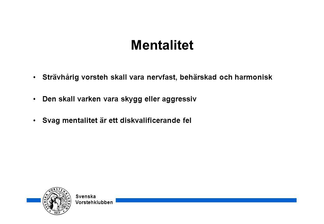 Svenska Vorstehklubben Mentalitet •Strävhårig vorsteh skall vara nervfast, behärskad och harmonisk •Den skall varken vara skygg eller aggressiv •Svag