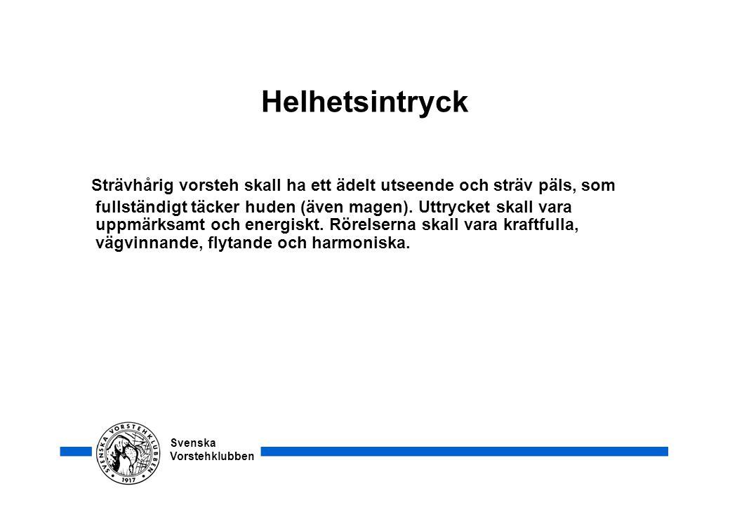 Svenska Vorstehklubben Helhetsintryck Strävhårig vorsteh skall ha ett ädelt utseende och sträv päls, som fullständigt täcker huden (även magen). Uttry