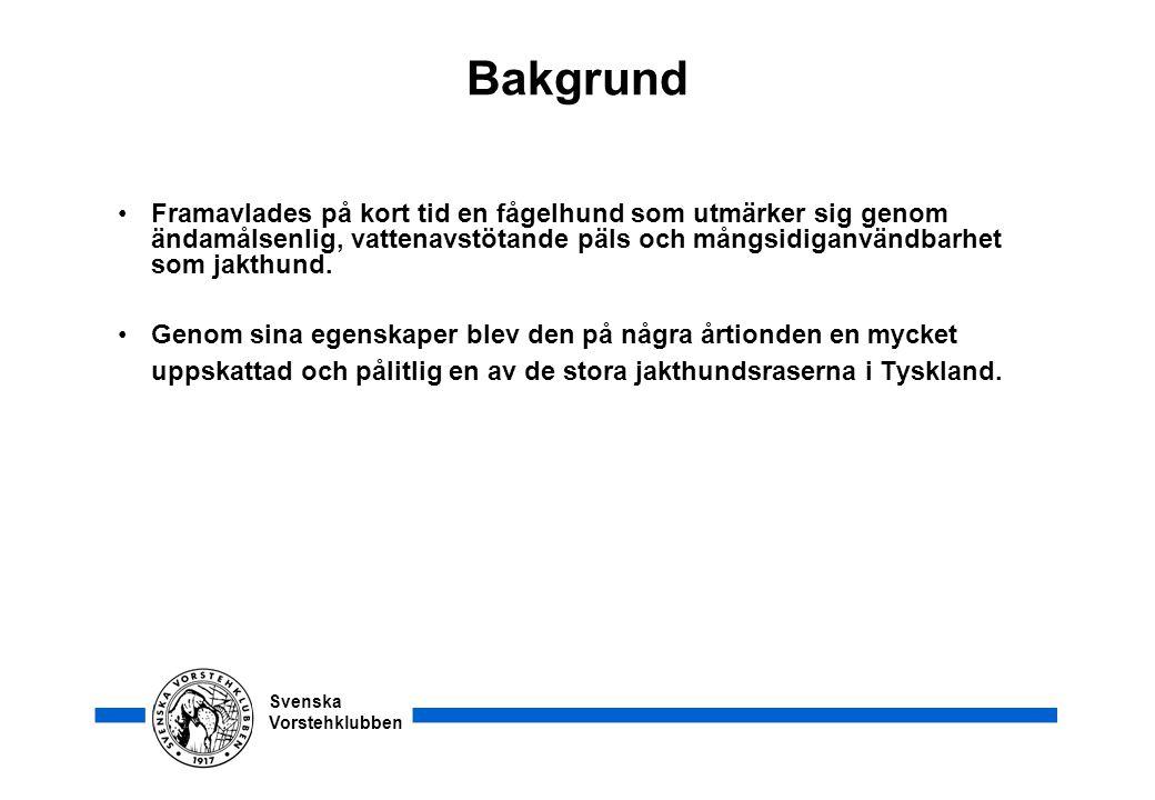 Svenska Vorstehklubben Bakgrund •Framavlades på kort tid en fågelhund som utmärker sig genom ändamålsenlig, vattenavstötande päls och mångsidiganvändb