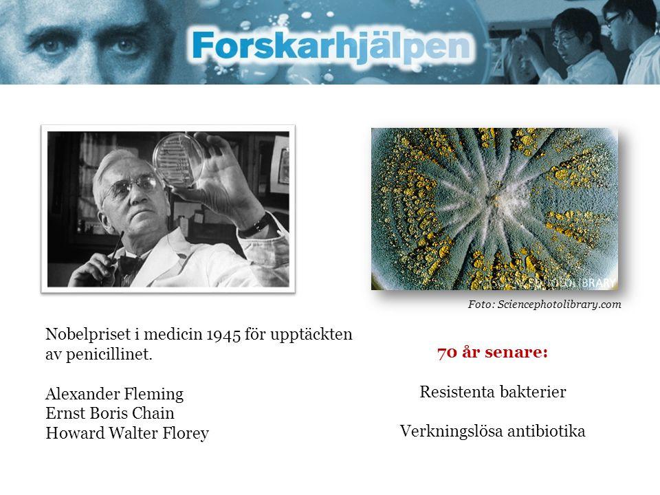 Nobelpriset i medicin 1945 för upptäckten av penicillinet. Alexander Fleming Ernst Boris Chain Howard Walter Florey Foto: Sciencephotolibrary.com 70 å