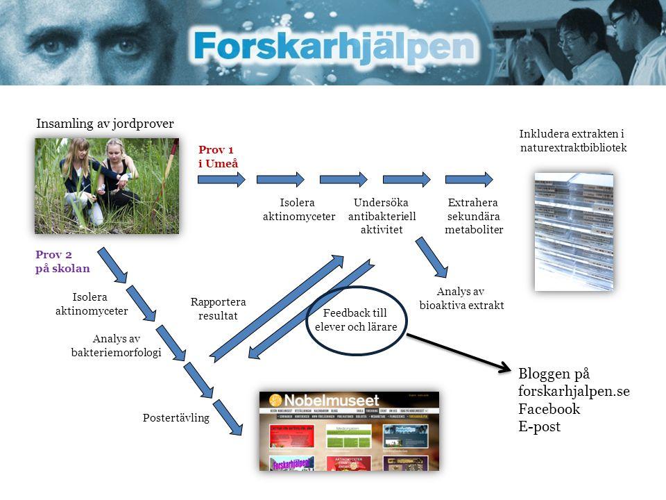Insamling av jordprover Prov 1 i Umeå Prov 2 på skolan Isolera aktinomyceter Isolera aktinomyceter Analys av bakteriemorfologi Rapportera resultat Pos