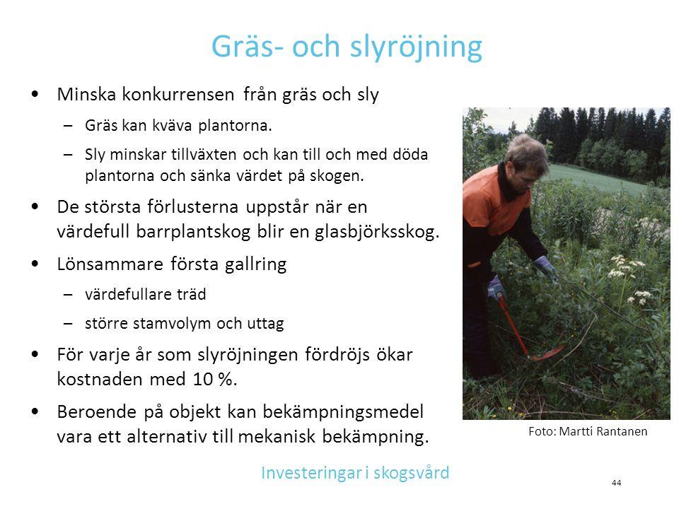 Gräs- och slyröjning •Minska konkurrensen från gräs och sly –Gräs kan kväva plantorna. –Sly minskar tillväxten och kan till och med döda plantorna och