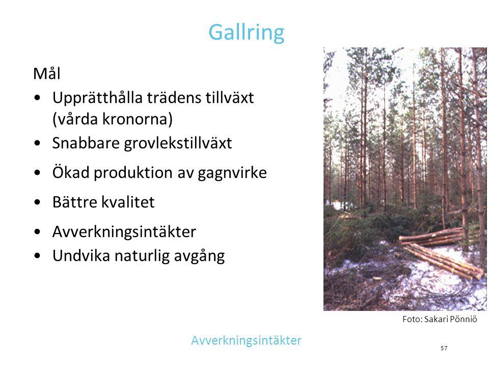 Gallring Mål •Upprätthålla trädens tillväxt (vårda kronorna) •Snabbare grovlekstillväxt •Ökad produktion av gagnvirke •Bättre kvalitet •Avverkningsint