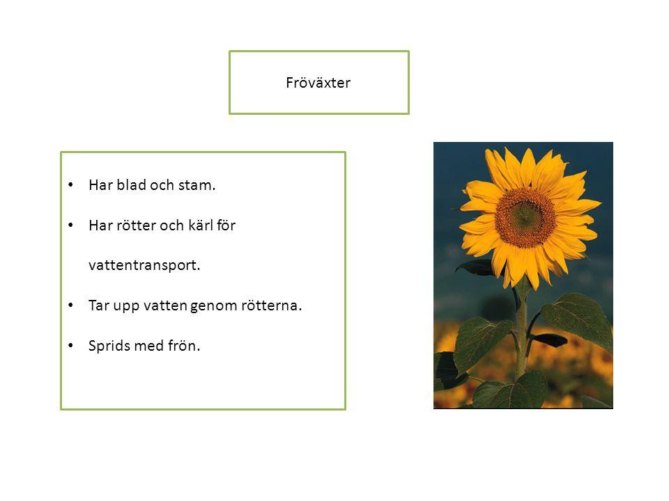 Fröväxter • Har blad och stam.• Har rötter och kärl för vattentransport.