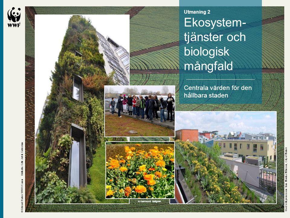 Utmaning 2 Ekosystem- tjänster och biologisk mångfald Centrala värden för den hållbara staden © Edward Parker WWF/ Canon Bildkälla. Gitte Jutvik Guter