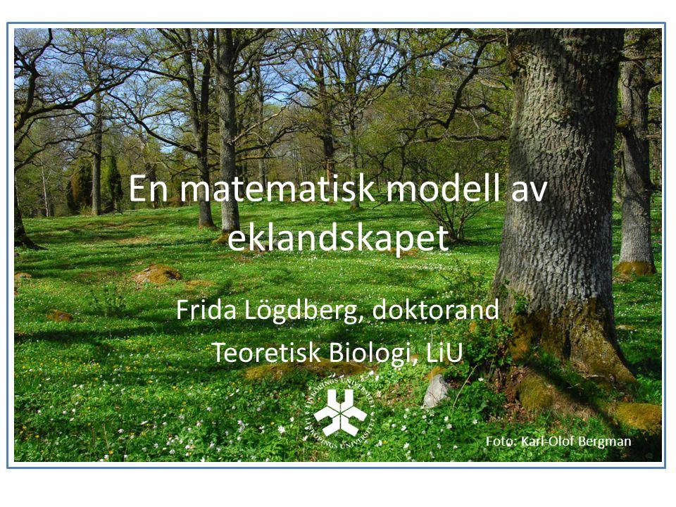 En matematisk modell av eklandskapet Frida Lögdberg, doktorand Teoretisk Biologi, LiU Foto: Karl-Olof Bergman
