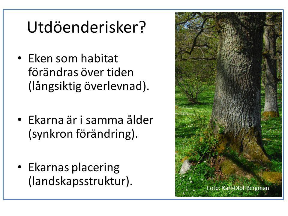 Utdöenderisker? • Eken som habitat förändras över tiden (långsiktig överlevnad). • Ekarna är i samma ålder (synkron förändring). • Ekarnas placering (