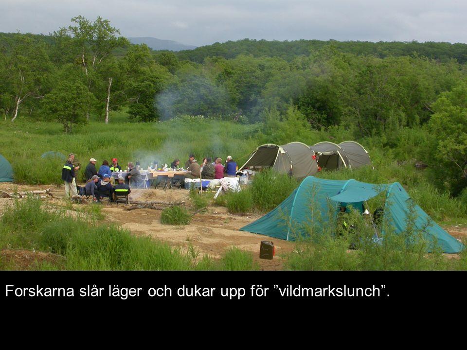 """Forskarna slår läger och dukar upp för """"vildmarkslunch""""."""