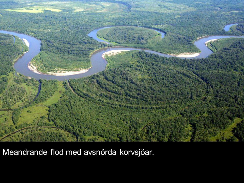 Meandrande flod med avsnörda korvsjöar.
