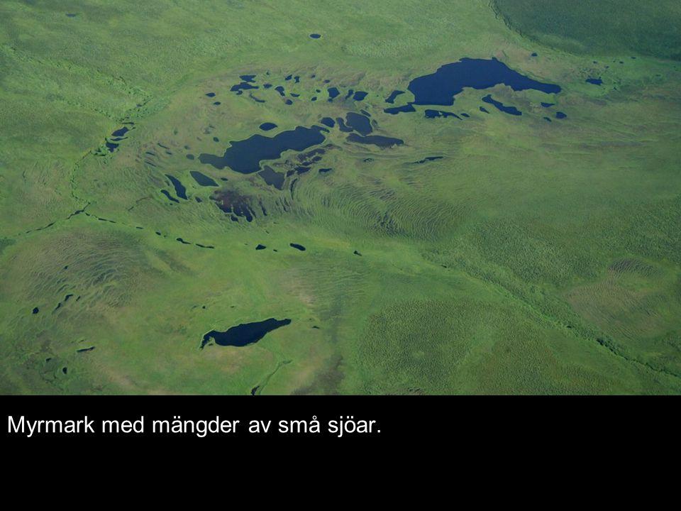 Myrmark med mängder av små sjöar.