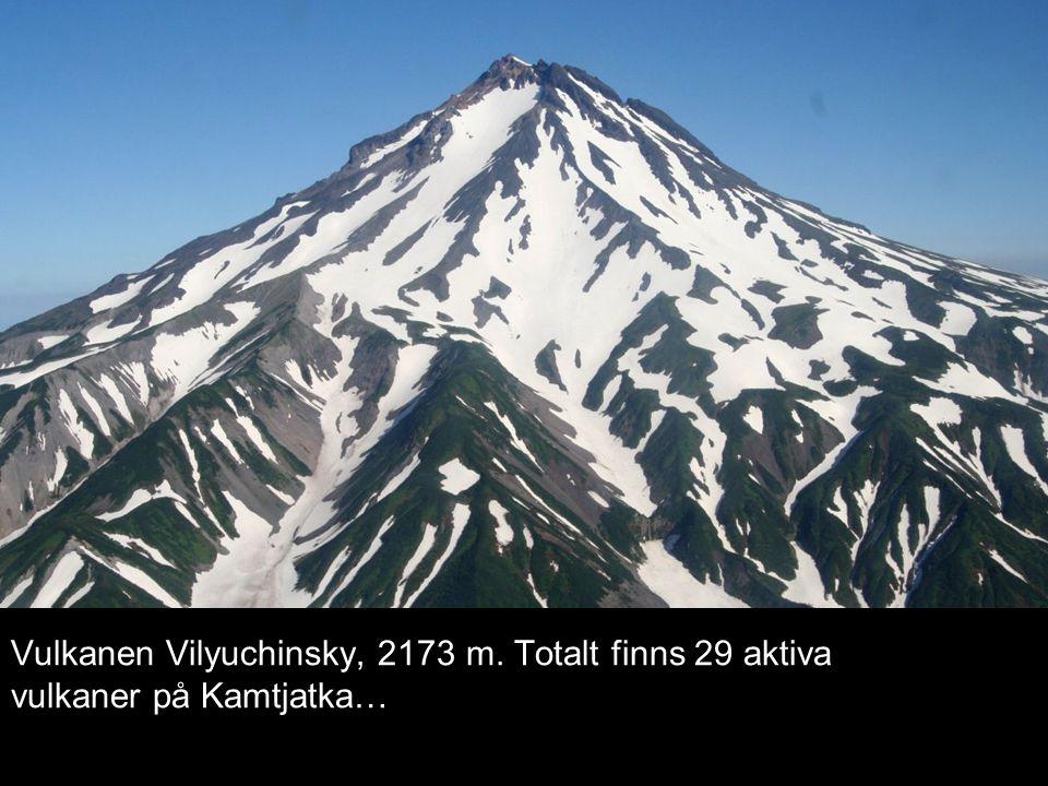 Vulkanen Vilyuchinsky, 2173 m. Totalt finns 29 aktiva vulkaner på Kamtjatka…