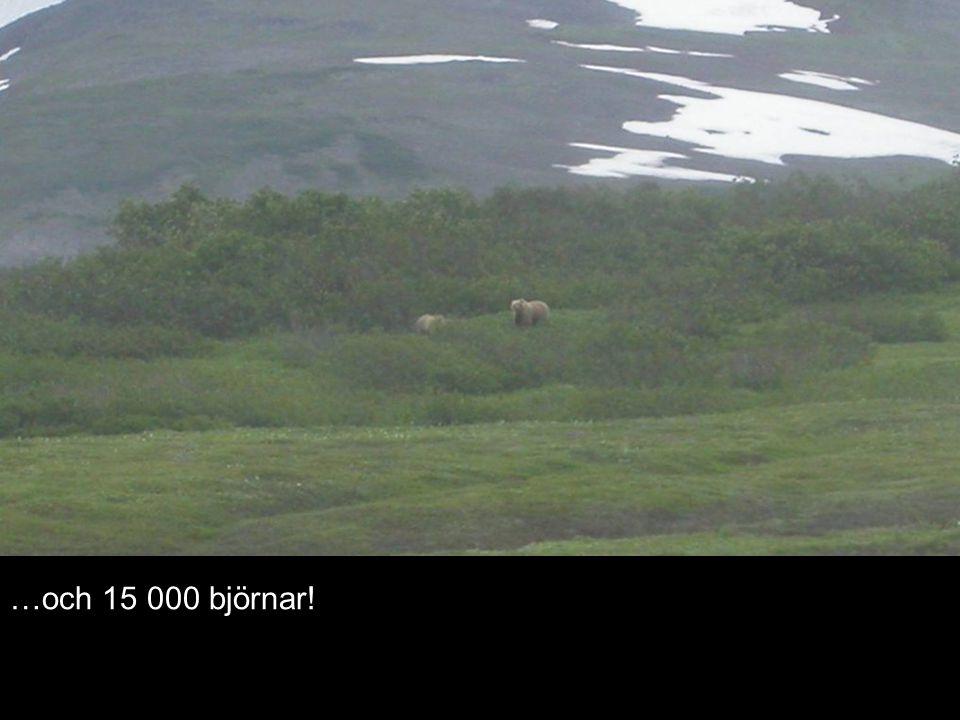 …och 15 000 björnar!